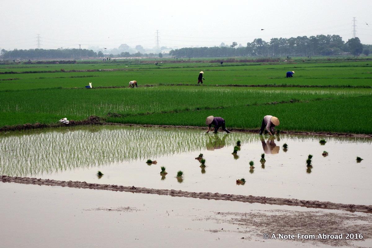 Vietnam ~ Farming and Burial Customs