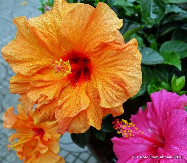 Spring blossoms in Hanoi
