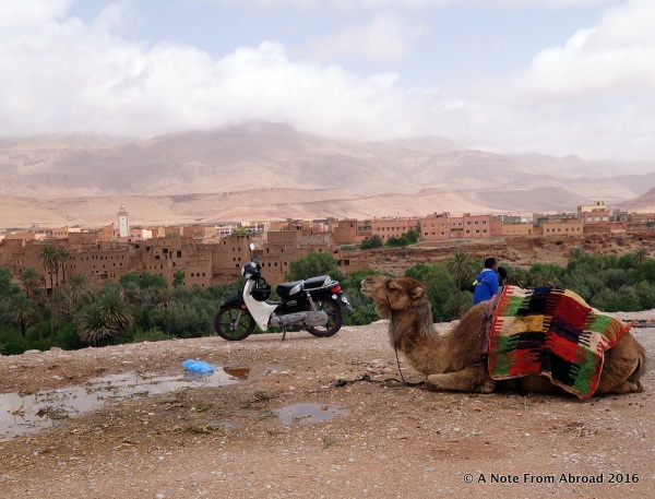 Want to ride a camel or take a scooter for a spin?