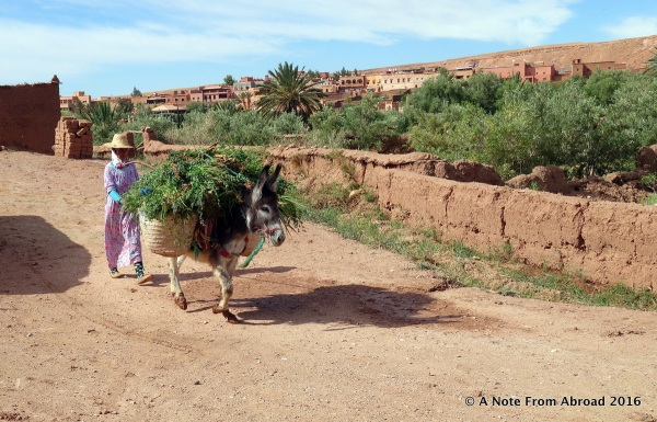 Donkey carrying a load of greens into the village