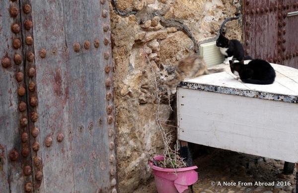Three kittens at play