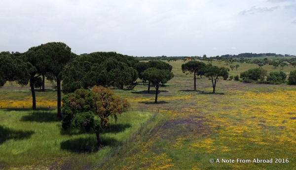 Spectacular wildflowers and cork trees