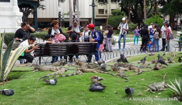 Seminario Park, Parque Bolivar, Parque de las Iguanas