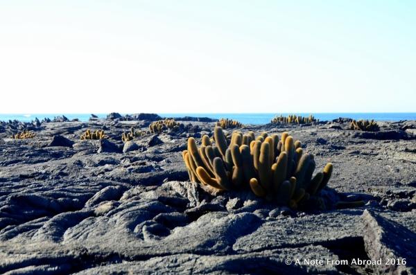 Black lava with a few cactus