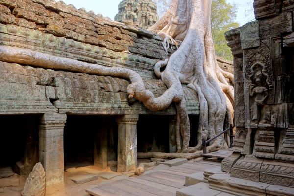 Tree roots hang over ancient walls